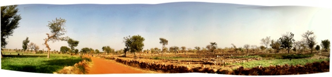 Beautiful green onion fields on the brink of Dogon country.