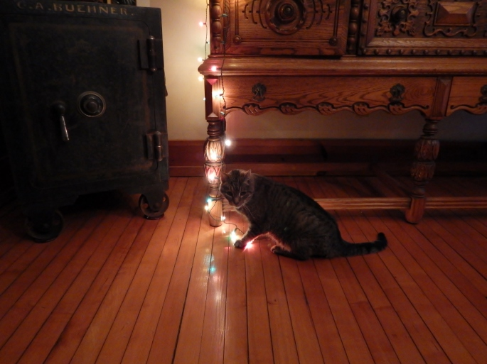 Mr. Cleo embracing his inner kitten playing with the lights on Christmas Eve.
