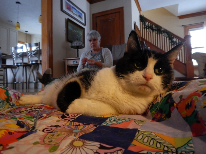 """Zuchi """"helps"""" Mom and I tie Jaco's Christmas quilt."""